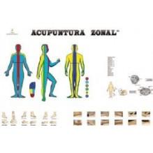 Poster Acupuntura Zonal 60cmx84cm