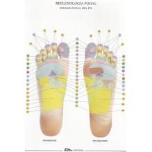 Reflexología podal - Lámina desplegable