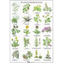 Plantas medicinales - Lámina desplegable