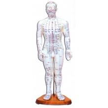 Cuerpo humano muñeco acupuntura masculino o femenino 46 cm soporte madera