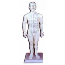 Cuerpo humano muñeco acupuntura masculino o femenino 46 cm.