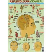 Ficha A4 plastificada Reflexologia craneal