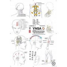 Lámina YNSA 2 craneopuntura de Yamamoto
