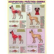 Ficha A-4 Acupuntura práctica canina