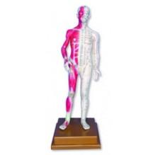 Cuerpo Humano Muñeco  De Acupuntura 85 Cm
