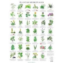 Lamina De Pared Plantas Medicinales